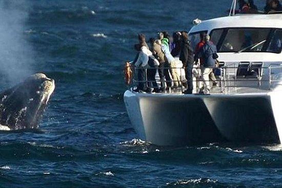 Excursão de dia inteiro à baleia e...