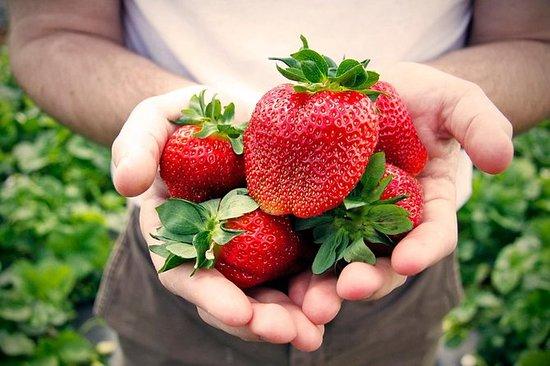 Private Strawberry Picking de dia...