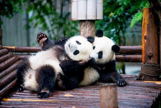Eintägige Chengdu Panda Private Tour...