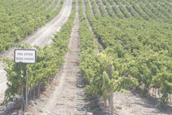 Experiencia privada en Jerez Bodega y...
