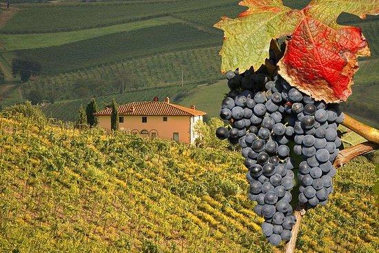 Tour privado de cata de vinos de Trufas...
