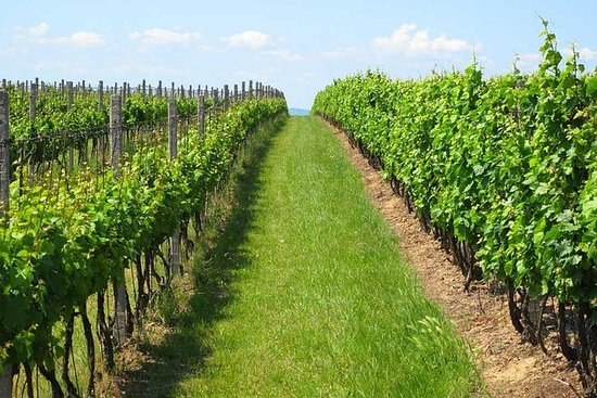 Guided Private Wine Tour med...