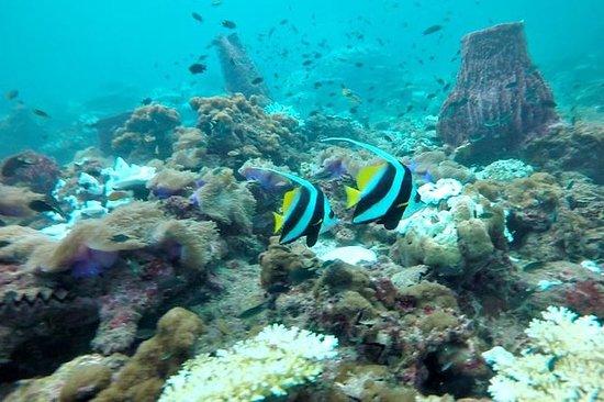 Coral Island Escapade  - 前兰卡威