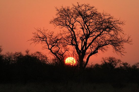 Kruger National Park Sunset Safari