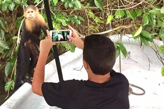 Visita privada en barco a la isla de los monos en el Canal de Panamá : Private Boat Tour of Monkey Island and the Panama Canal from Panama City