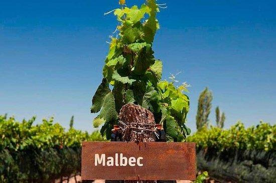 Seja um produtor de vinho por um dia...