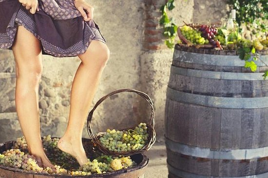 GRAPE STOMPING FROM FLORENCE...