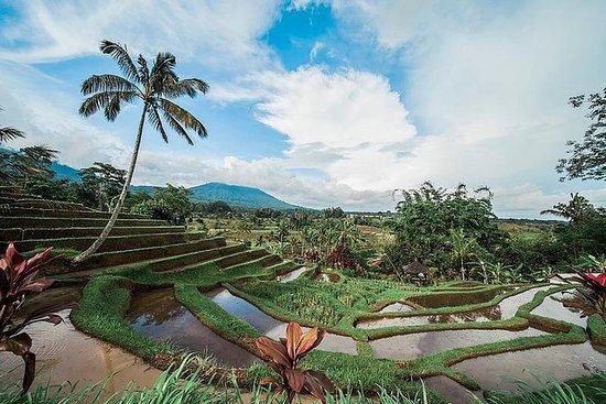 유네스코 사이트 : Bedugul, Jatiluwih & Tanah Lot 1 일 투어 사진