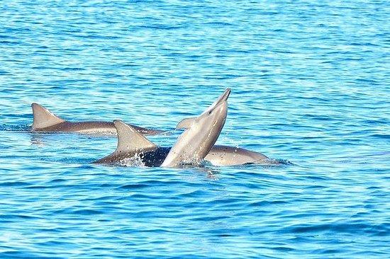 Simma med vilda delfiner & Benitiers ...