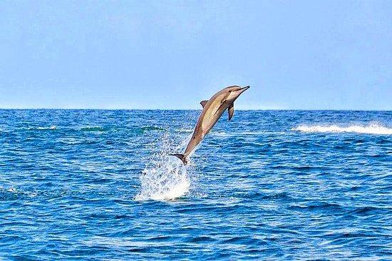 Schwimmen mit wilden Delfinen...