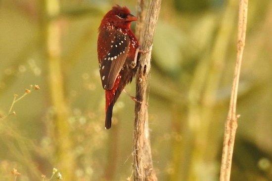 Experiência Menar Lake & Menar Bird...