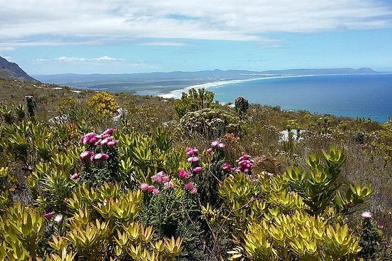 Hermanus Wine & Fynbos Walk