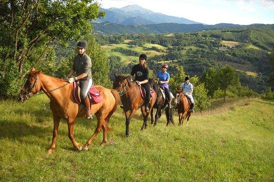 Tour privé d'équitation dans la...