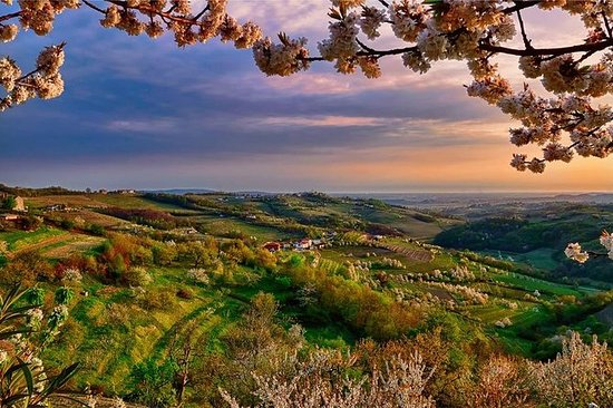 Collio:来自的里雅斯特的Cividale Del Friuli和品酒会
