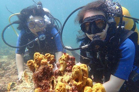Scuba Dive Discovery