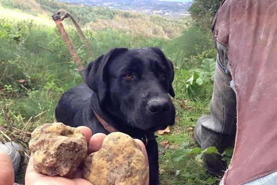 Expérience de chasse à la truffe de...