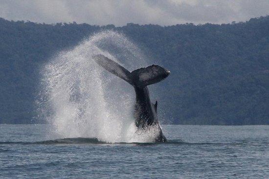 Tour de observación de ballenas...