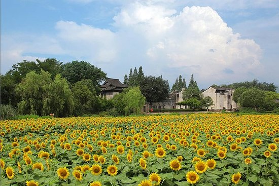 Private Day Tour naar Wuzhen Water Town ...