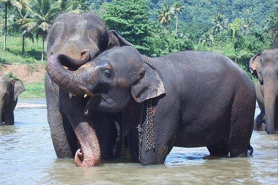 Tour privato di un giorno a Kandy con