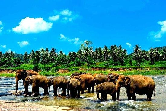 Tour privato del Kandy Day con