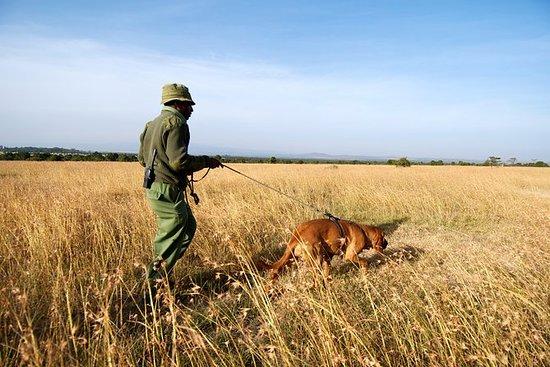 Hundesporing på Ol Pejeta Conservancy