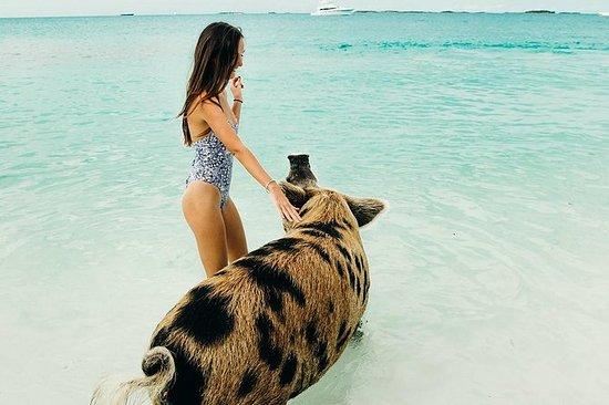 Exuma Cays Swimming Pigs Tour con SIX