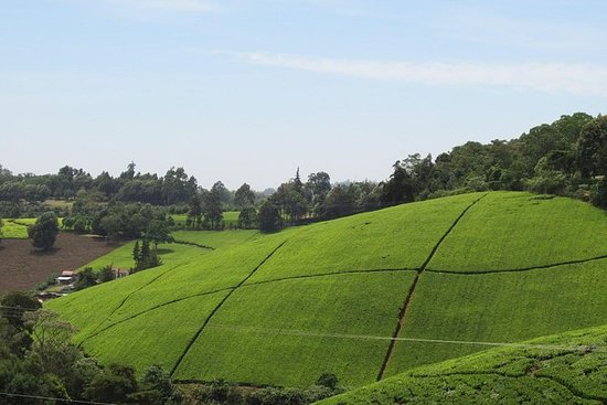 Spannende Kiambethu Tee Farm in Limuru