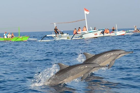 Besuchen Sie Balis wilde Delfine in Lovina inklusive Git Git Wasserfall und Tempel: Visit Bali's Wild Dolphins at Lovina Including Git Git Waterfall and Temple