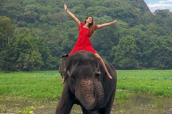 Tour de 5 noches por 6 días en Sri...