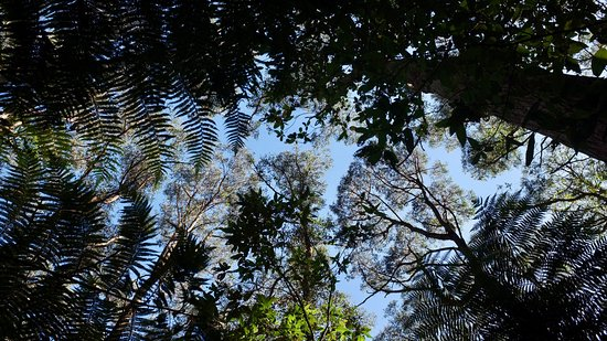 Toolangi State Forest - on our doorstep