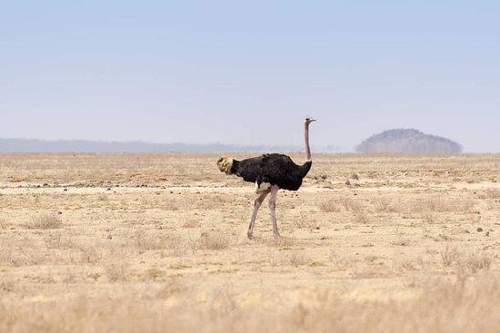 Serengeti National Park, Tanzânia: SERENGETI