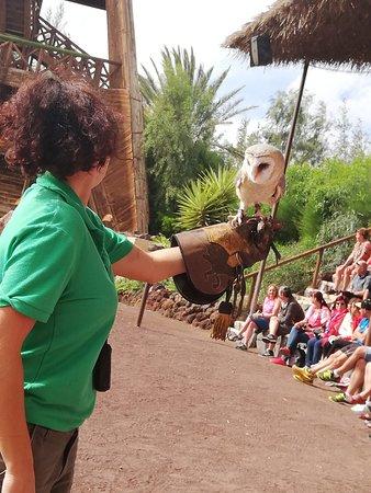 Oasis Park Fuerteventura: Sowa