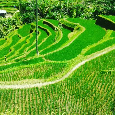 Bali Liberty Tour - Private Day Tour