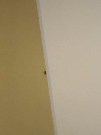 Cimice sulla parete. (stanza appena occupata e non ancora utilizzata)