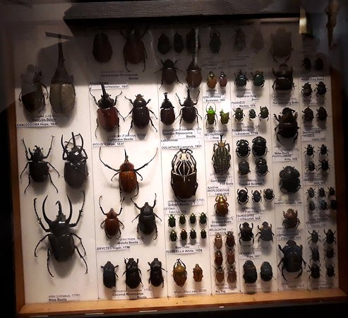 Insects in a case