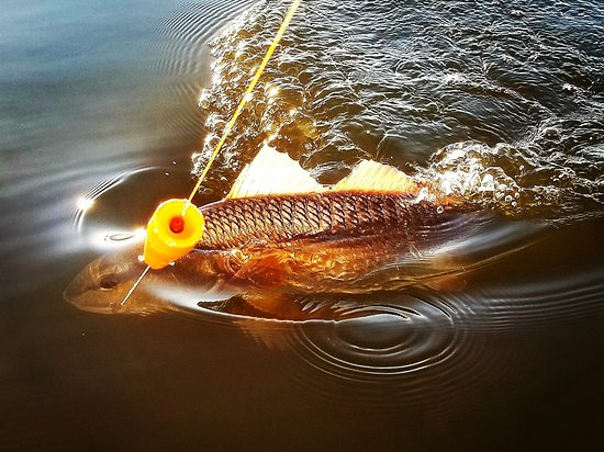 Capt John's Fin-tastic Charters: Beautiful #redfish