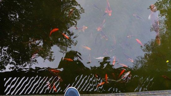I Giardini di Villa Melzi: Lago Artificial