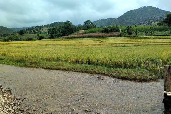 Nyaungshwe, Myanmar: Rice fields near the hill tripe villages