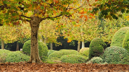 Sycamore autumn colours