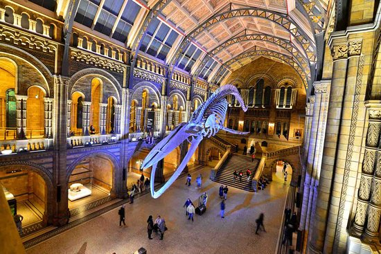 Blue Whale skeleton looms over the great hall