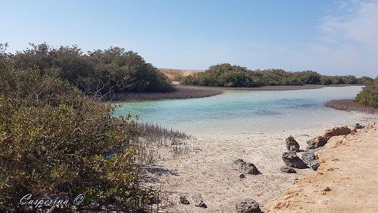 Рас-Мохаммед, Египет: Ras Mohammed - canale delle mangrovie