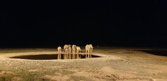 Elephants at night