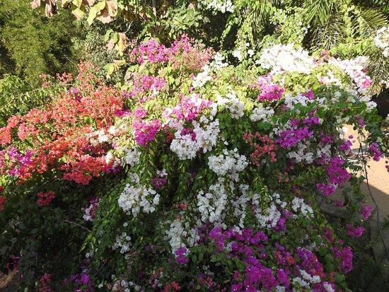 Beautiful flora all around