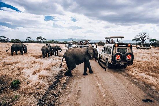 Tanzania Safari Explorers