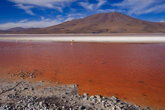 Laguna Colorada, Bolivia: Laguna Colorado