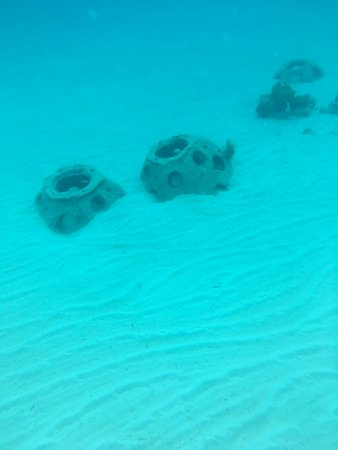 many of the sculptures are these reef balls