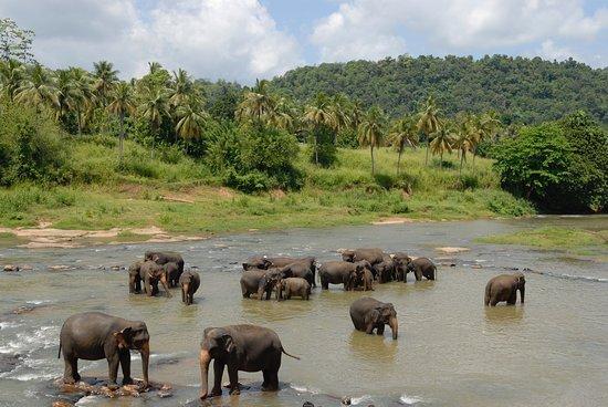 Mithuli Lanka Tours