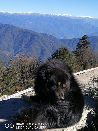 Dochula Eco Retreat: magnificient himalayan panoramic view