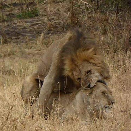 Safari in Serengeti national park the wildlife destination