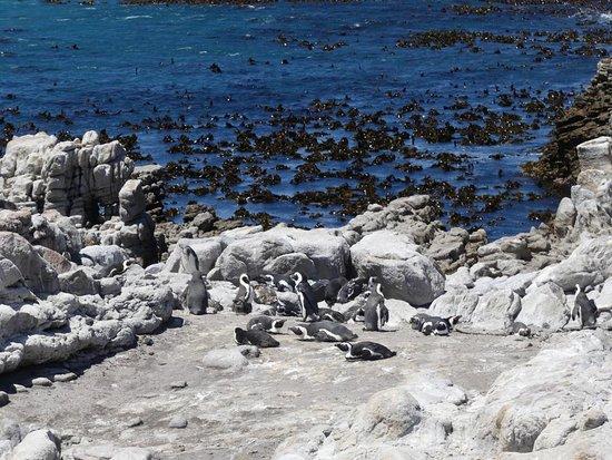 Kelp im Wasser